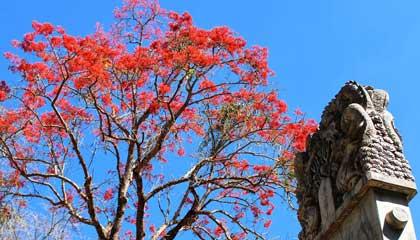Árvore e obra Gui Tuo Bei em Inhotim - Capa