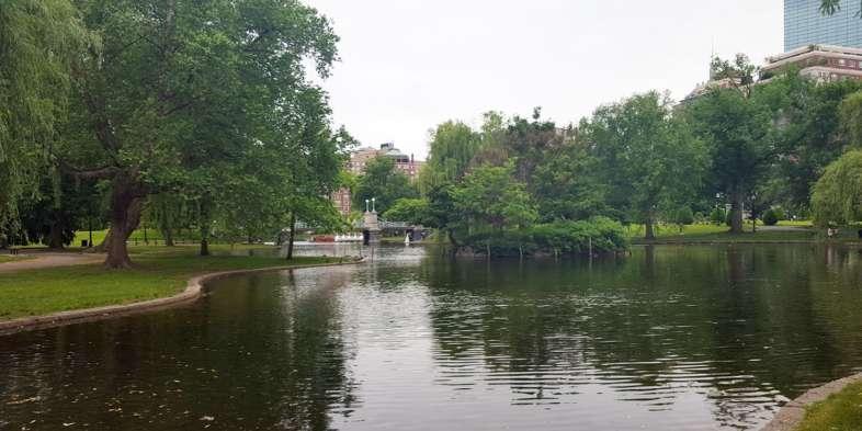 Lago com patos e cisnes do Boston Public Garden